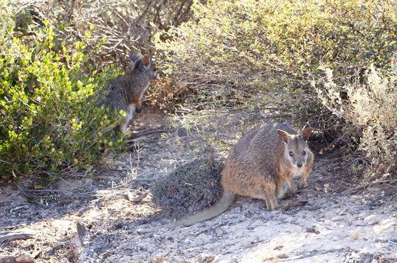 Abrolhos Islands Ground 11.jpg