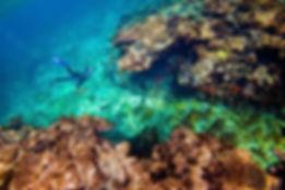 Abrolhos Islands.jpg
