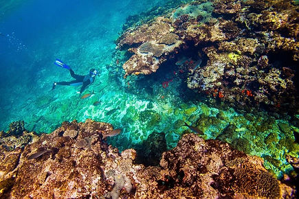 Abrolhos Islands snorkelling