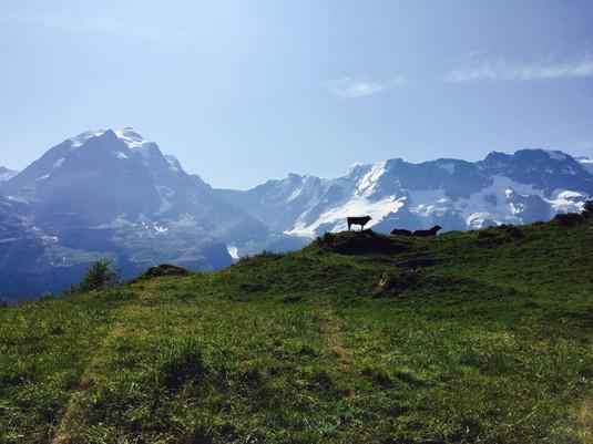 Switzerland (17).JPEG