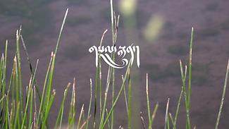 Sal-Trun