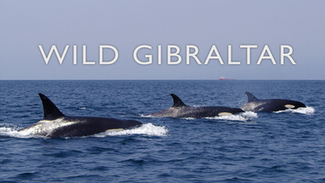 Wild Gibraltar