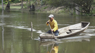 Fishponds Of The Amazon
