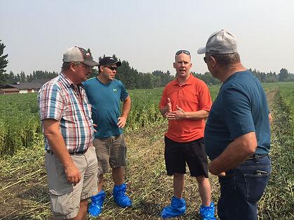 Good faba bean farming practices.
