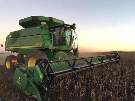 Faba harvest.