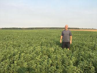 faba bean field