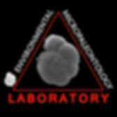 Michael Martinez-Colon, puerto rico, tropical, foraminifera, forams, foram, geology, micropaleontology, FAMU, Puerto Rico, environmental, Ammonia, A. beccariia