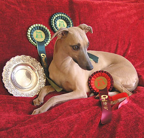 Copy of Honey Crufts BOB 2006.JPG