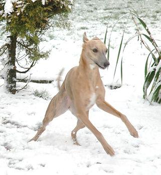 Tinsel-Snow.jpg