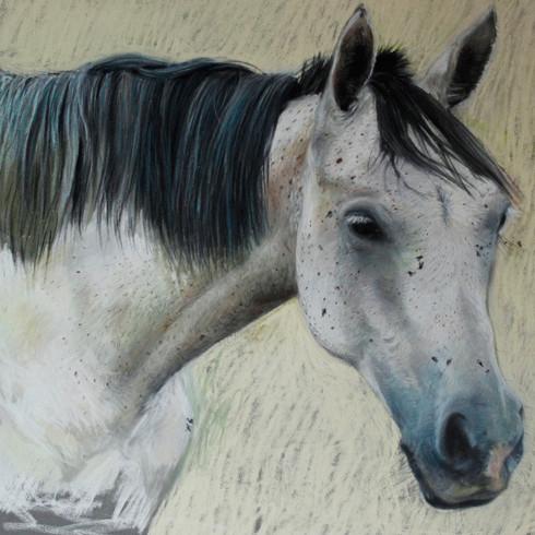 Portrait cheval pastel sec, 30x40cm