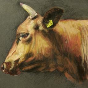 Cow,     pastels secs et crayons pastels sur pastelmat   24x30cm