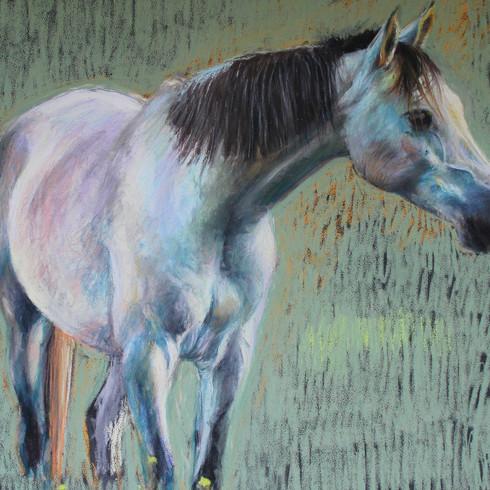 portrait cheval,  pastel sec sur pastelmat  30X40cm