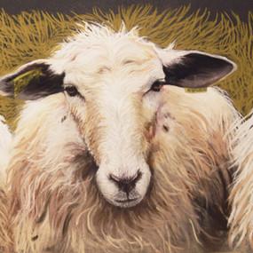 Sheep, pastels secs et crayons pastels sur pastelmat,  24x30cm