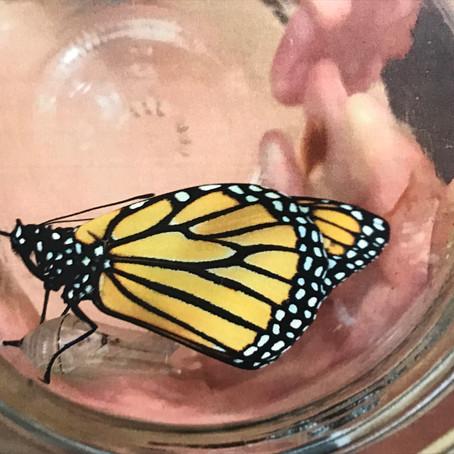 CRITTER SPOTLIGHT: Monarch Butterfly: Danaus plexippus