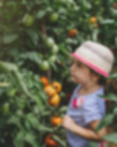 Child Picking Fruit