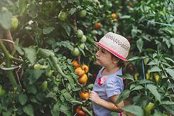 Kind Obst pflücken