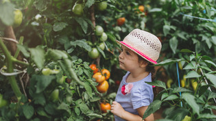 ما هي عمالة الأطفال الخطرة؟