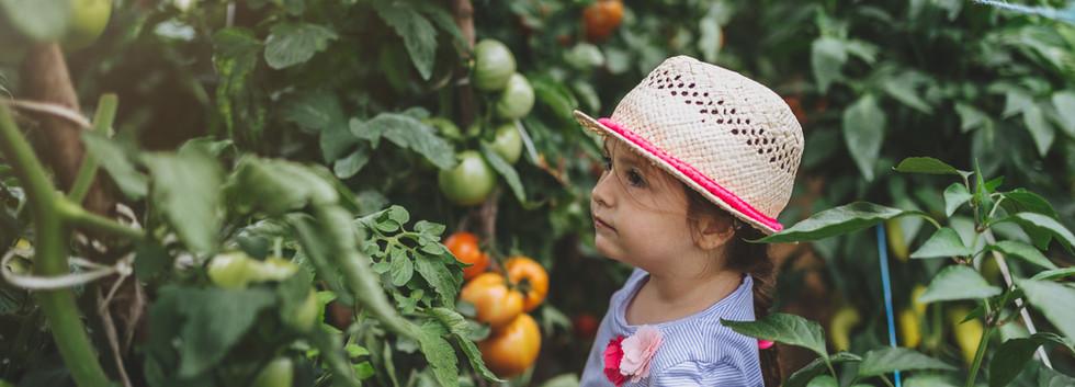 Fruta de colheita de criança