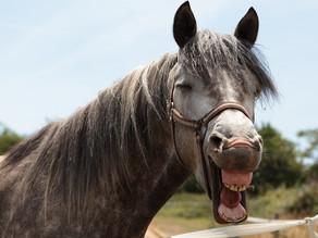 Lederen til hest