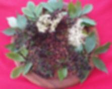Elderberry and Flowers and Leaves.jpg