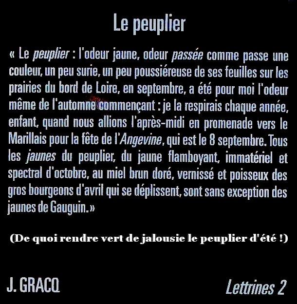 Lettrines