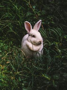 小動物さんプランを見る