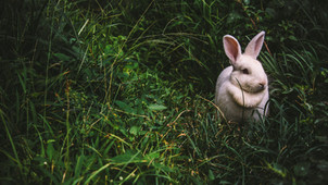 If you keep chasing this rabbit...
