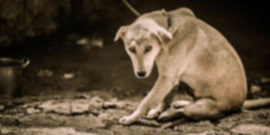 Animal-Cruelty-Abuse-Neglect_x1200.jpg