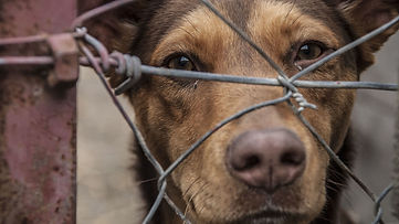 5641683_102319-kabc-shutterstock-sad-dog