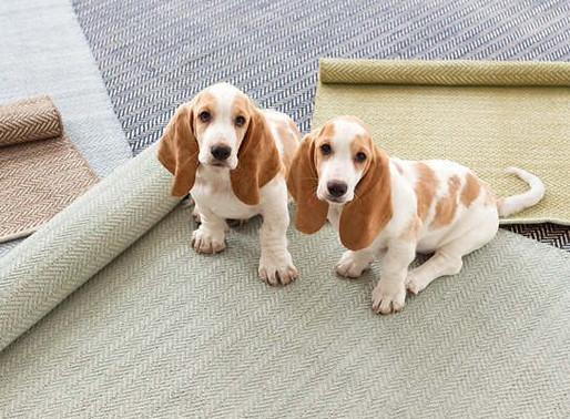 Pet-Friendly Rugs