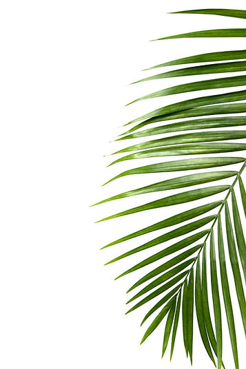 storyblocks-green-leaf-of-palm-tree-isol