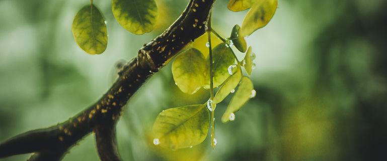 branch-dew-green-632180.jpg