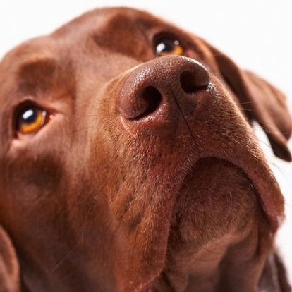 browndog.jpg