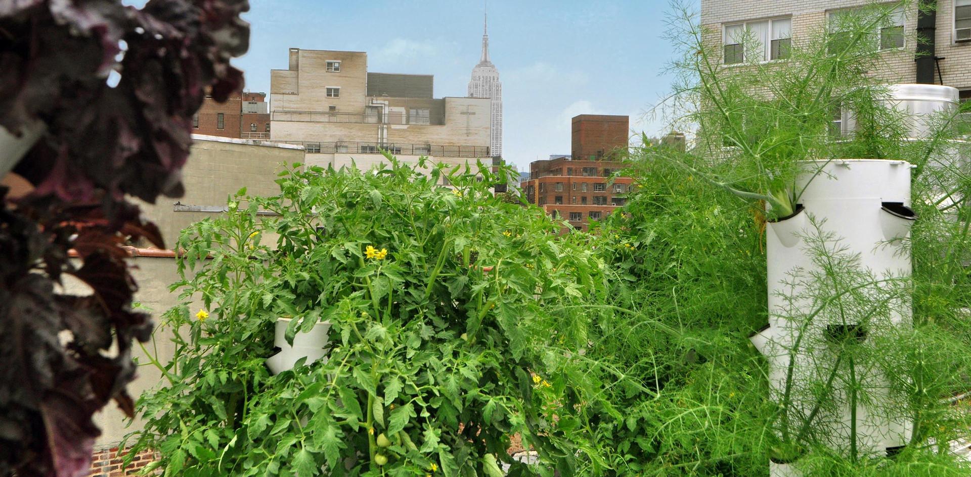 Garden 9.jpg