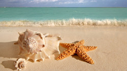 Millions of Sea Shells