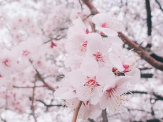 Traveling to Korea – tips, money & weather