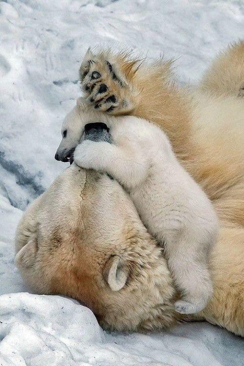 Polar bear muse