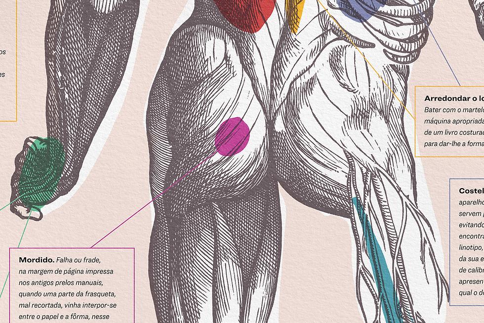 diagrama_corpo.png