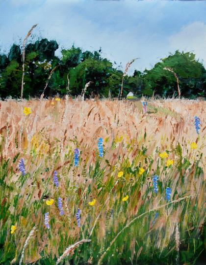 Summer meadow, Bruntwood Park