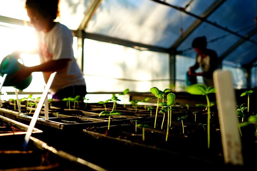 greenhouse_180430034509.jpeg