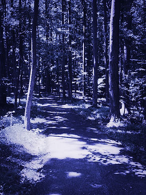 Bike trail 5.jpg