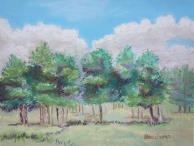 Pine Grove with Clouds