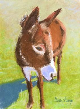 Hee Haw Donkey