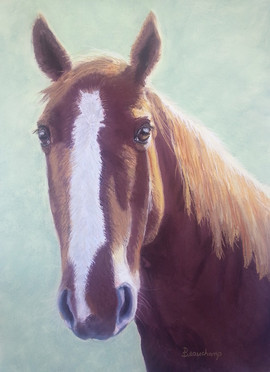 Horse with Blaze