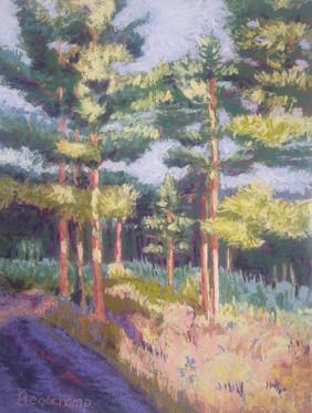 Twilight on the Pines