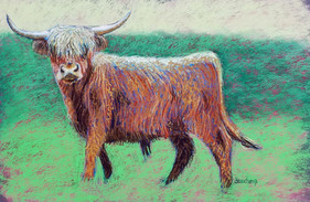 Curly Highlands Cow