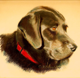 Sweet Labrador