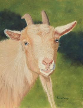 Gwen's Goat