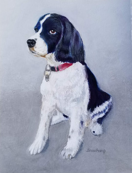 Lily the Spaniel