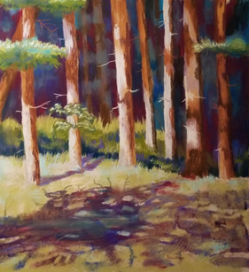 Forest Shadows
